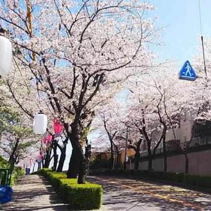 雁宿公園桜